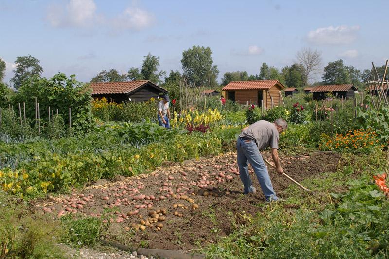 Oise les jardins familiaux pris d assaut parisvox for Jardin familiaux