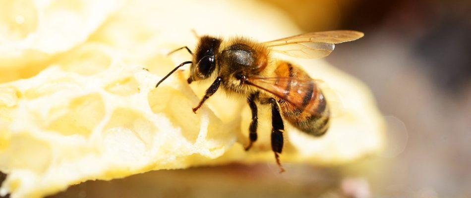 Apiculture: vers un développement des ruches parisiennes
