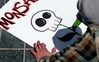 Le Conseil d'État annule l'interdiction du maïs OGM Monsanto