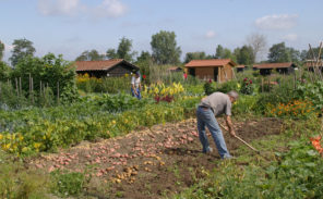 Oise : les « jardins familiaux » pris d'assaut