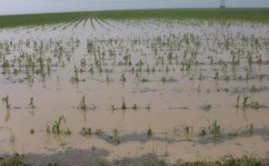 Les agriculteurs inondent la préfecture de l'Essonne