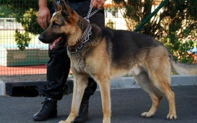Villejuif: des maîtres-chiens agressés