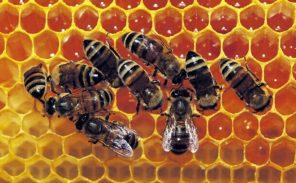 Nos abeilles ont du talent: protégeons-les!