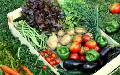 Ecologie/alimentation: les AMAP
