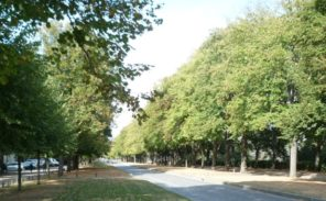 Meudon, les arbres font place à un parking