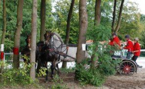 Concours d'attelage à Compiègne