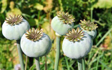 Le Bourget: trois indiens arrêtés pour trafic d'opium
