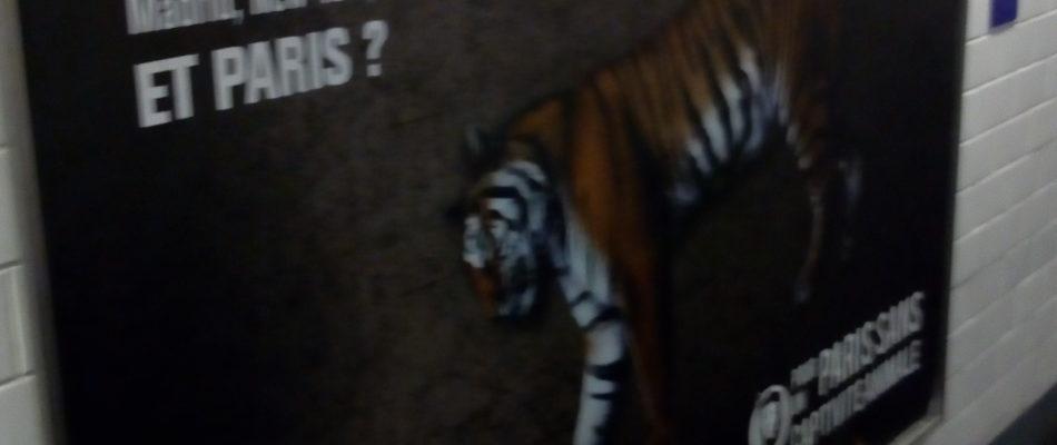 Une campagne d'affichage réclame l'interdiction de la détention d'animaux par les cirques