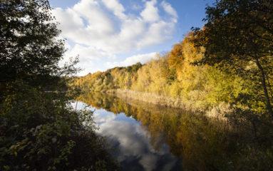 Une forêt de plus d'un million d'arbres bientôt dans le Val d'Oise?