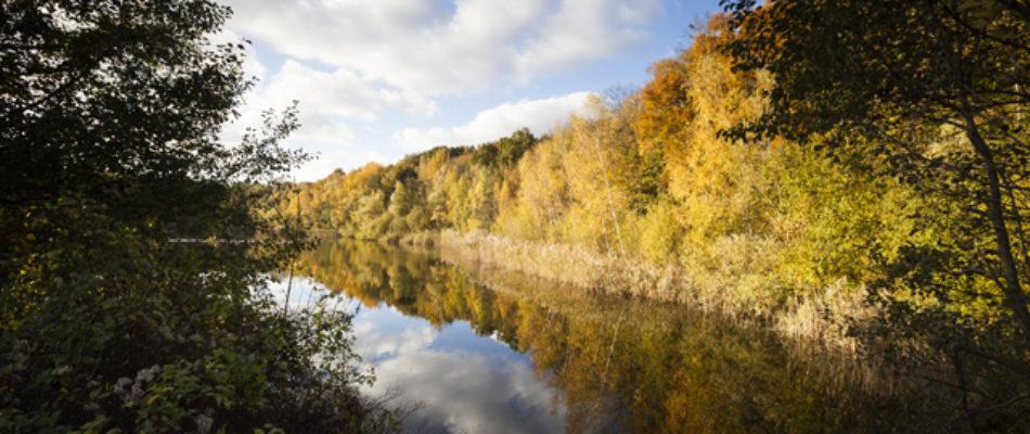 Lancement d'une application pour (re)découvrir les forêts franciliennes