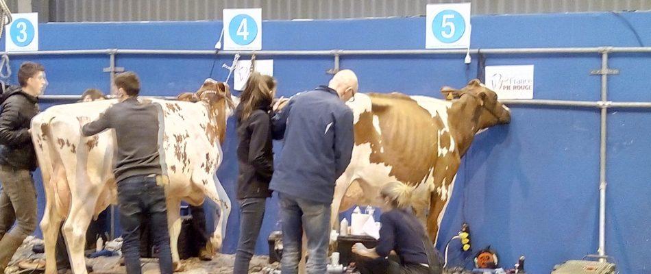 PETA contre la consommation de lait