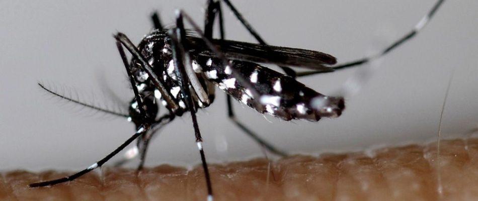 La présence de «moustiques tigres» signalée en Ile-de-France