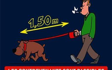 Nouvelles règles pour les chiens à Nogent-sur-Marne