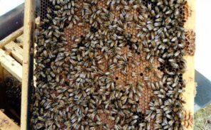 Paris: Des ruches dans les cimetières