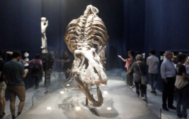 Un tricératops exposé avant d'être vendu aux enchères