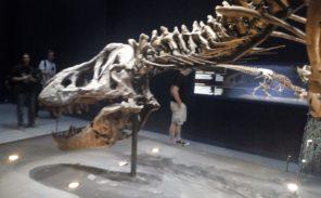 Un T-Rex à Paris: prolongations jusqu'en novembre!
