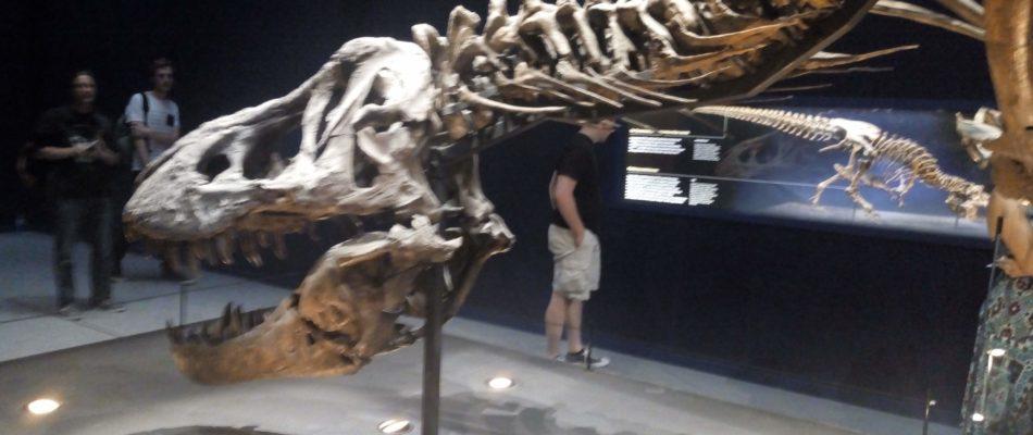 Un T-Rex à Paris: prolongations jusqu'en novembre !