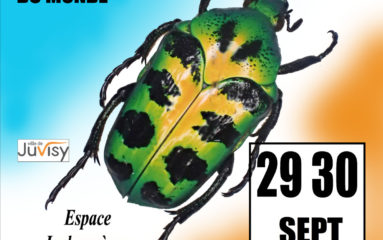 29-30 septembre : Bourse internationale aux insectes à Juvisy