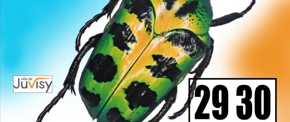 29-30 septembre: Bourse internationale aux insectes à Juvisy