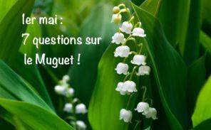 1er mai: 7 questions sur le Muguet