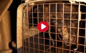 La Courneuve: 9 chiens libérés par 30 millions d'amis